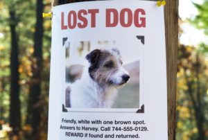 Lost pets - a preventable occurrence!
