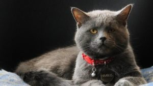 Mount Washington Observatory's new cat, Nimbus